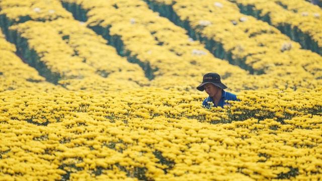Choáng ngợp cảnh sắc tuyệt đẹp trong vựa hoa lớn nhất ở Đồng Nai - 2