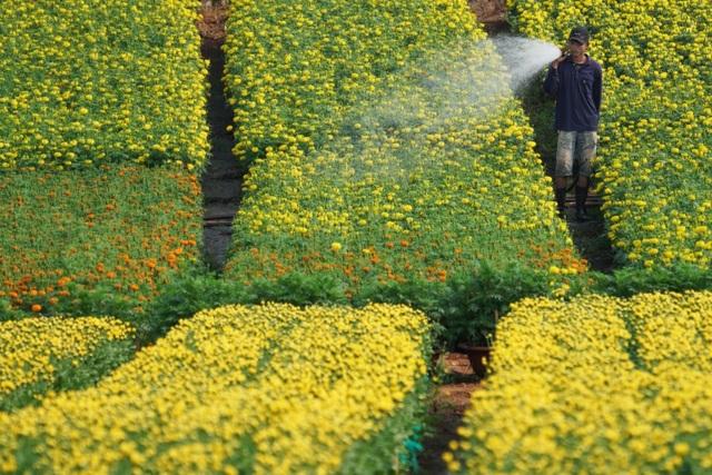 Choáng ngợp cảnh sắc tuyệt đẹp trong vựa hoa lớn nhất ở Đồng Nai - 3
