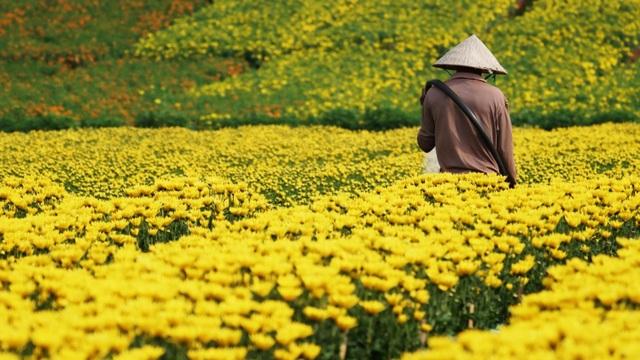 Choáng ngợp cảnh sắc tuyệt đẹp trong vựa hoa lớn nhất ở Đồng Nai - 5