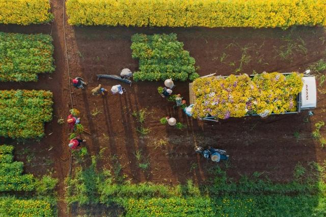 Choáng ngợp cảnh sắc tuyệt đẹp trong vựa hoa lớn nhất ở Đồng Nai - 6