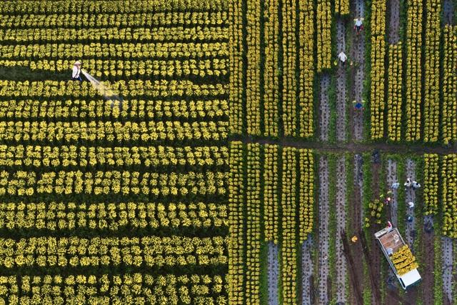 Choáng ngợp cảnh sắc tuyệt đẹp trong vựa hoa lớn nhất ở Đồng Nai - 7