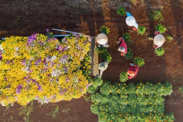Choáng ngợp cảnh sắc tuyệt đẹp trong vựa hoa lớn nhất ở Đồng Nai - 8