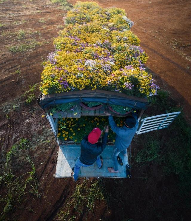 Choáng ngợp cảnh sắc tuyệt đẹp trong vựa hoa lớn nhất ở Đồng Nai - 10