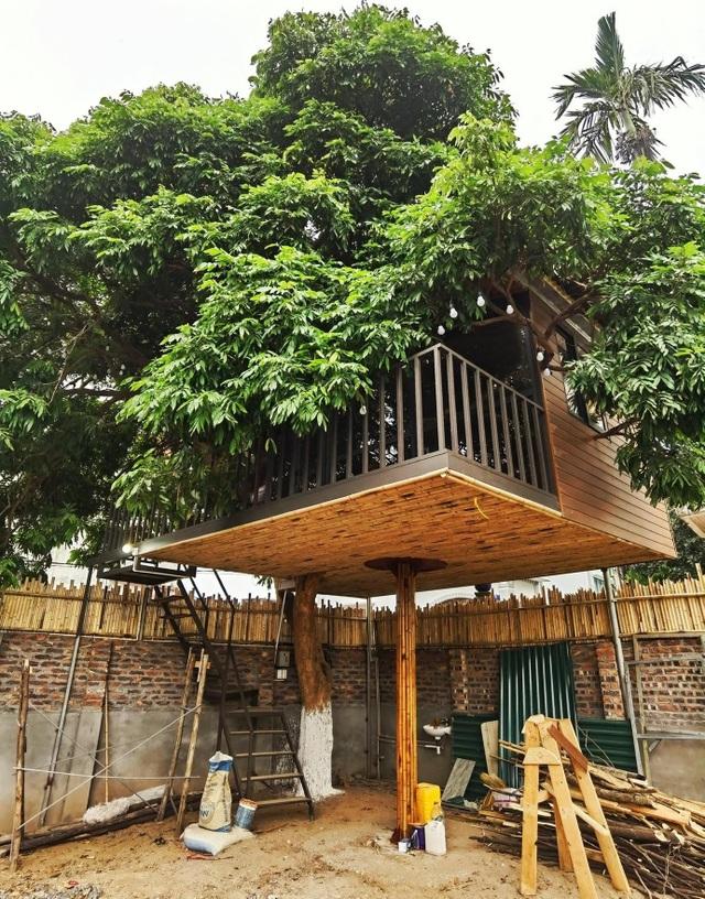 Ông bố ở Hà Nội chi trăm triệu đồng làm nhà trên cây độc đáo tặng vợ con - 1