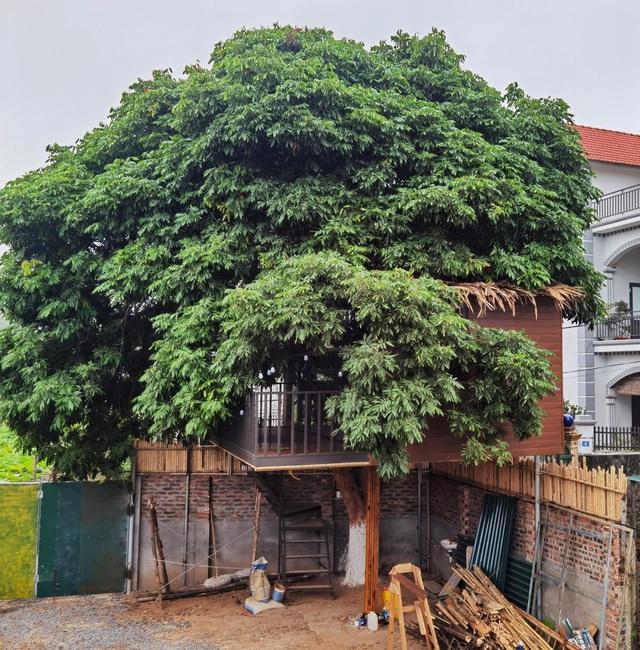 Ông bố ở Hà Nội chi trăm triệu đồng làm nhà trên cây độc đáo tặng vợ con - 2