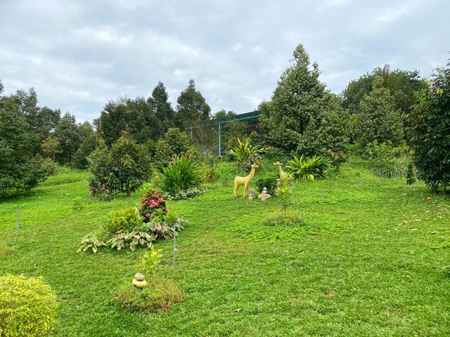 Trang trại rộng 1,5 ha, tràn ngập rau trái sạch của nữ giảng viên ở Sài Gòn - 1
