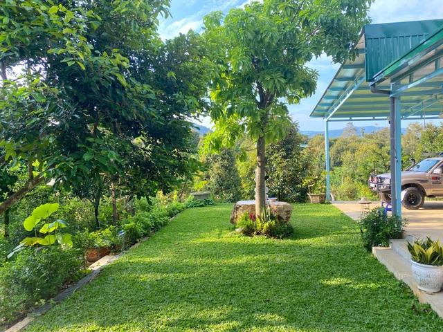 Trang trại rộng 1,5 ha, tràn ngập rau trái sạch của nữ giảng viên ở Sài Gòn - 3
