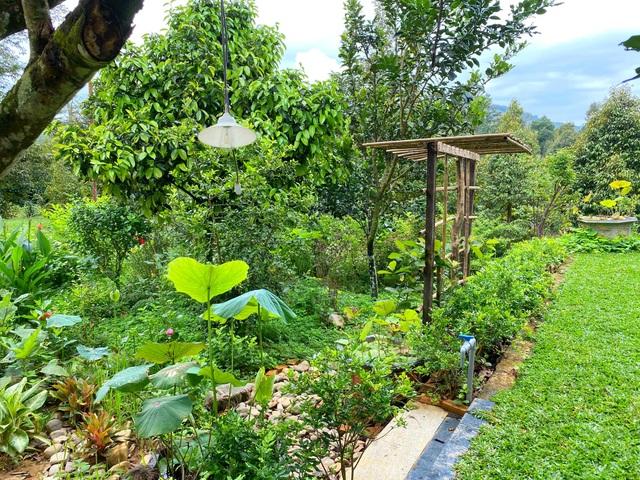 Trang trại rộng 1,5 ha, tràn ngập rau trái sạch của nữ giảng viên ở Sài Gòn - 5