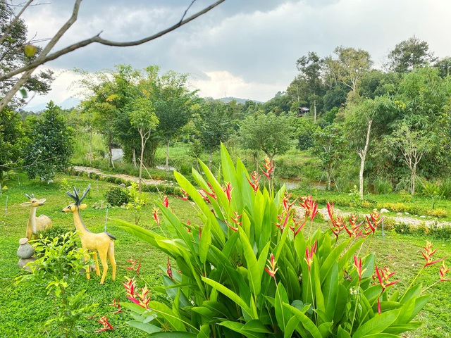 Trang trại rộng 1,5 ha, tràn ngập rau trái sạch của nữ giảng viên ở Sài Gòn - 6