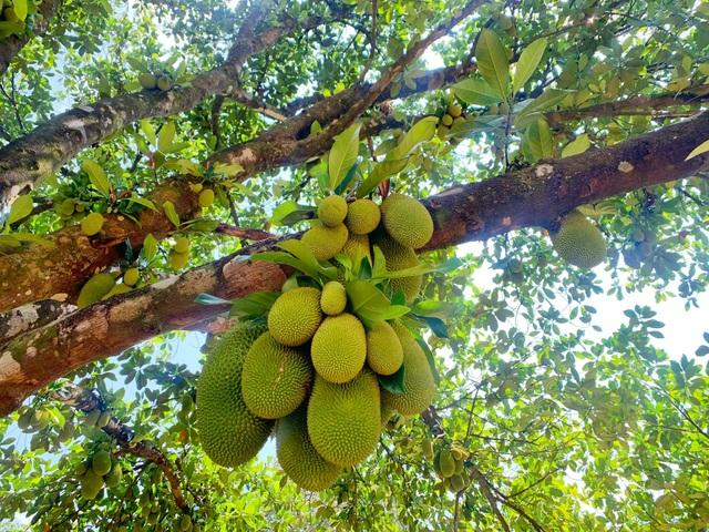 Trang trại rộng 1,5 ha, tràn ngập rau trái sạch của nữ giảng viên ở Sài Gòn - 7