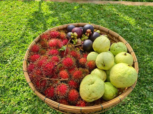 Trang trại rộng 1,5 ha, tràn ngập rau trái sạch của nữ giảng viên ở Sài Gòn - 9