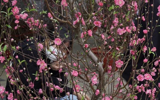 Ế hoa Tết, dân buôn thà đập chậu bỏ chứ không bán tháo - 9