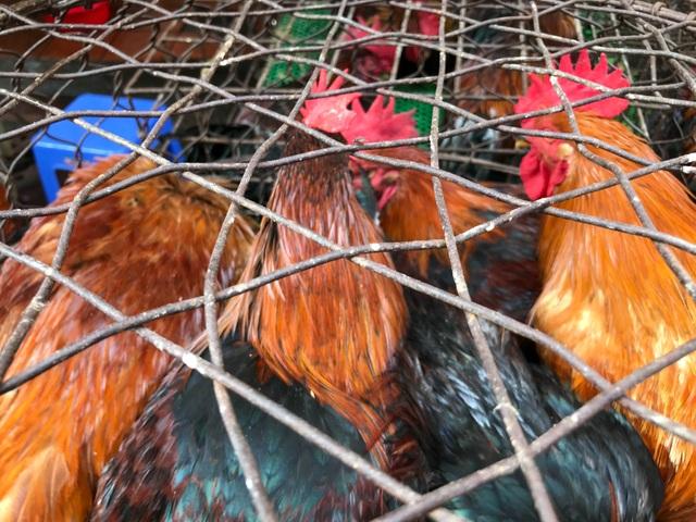 Hốt bạc từ gà, 6 người bán từ sáng đến khuya, không kịp về quê ăn Tết - 9