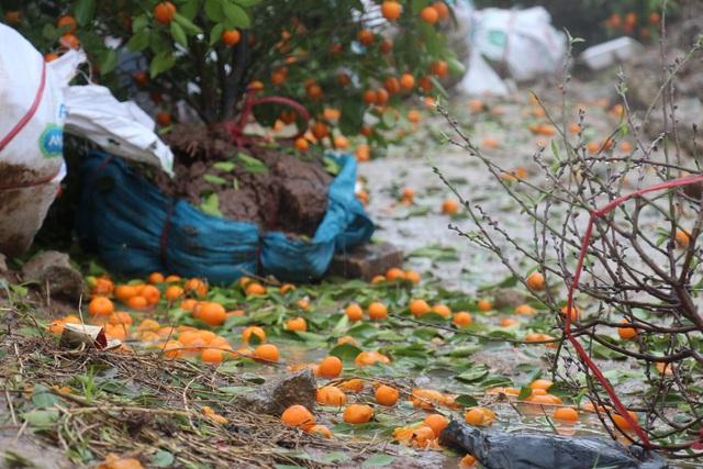 Mưa giông lớn quật đổ hàng trăm chậu quất, đào ở chợ hoa Tết - 10