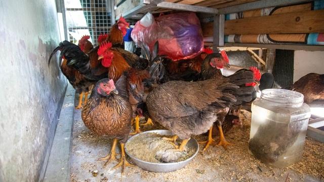 Hốt bạc từ gà, 6 người bán từ sáng đến khuya, không kịp về quê ăn Tết - 6