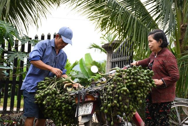 Cau Tết tăng giá chóng mặt, nông dân kiếm tiền triệu mỗi ngày - 2