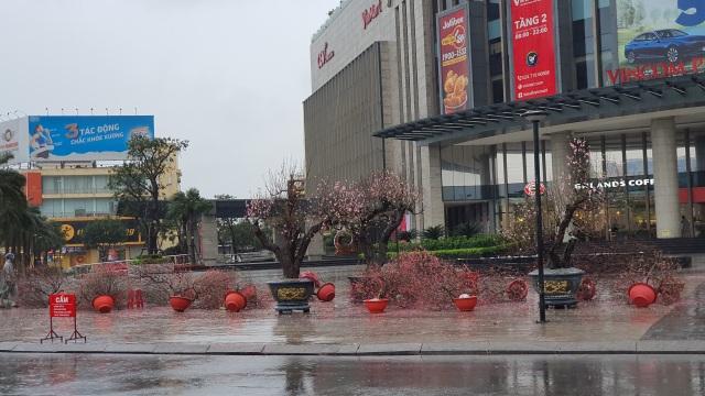 Mưa giông lớn quật đổ hàng trăm chậu quất, đào ở chợ hoa Tết - 12