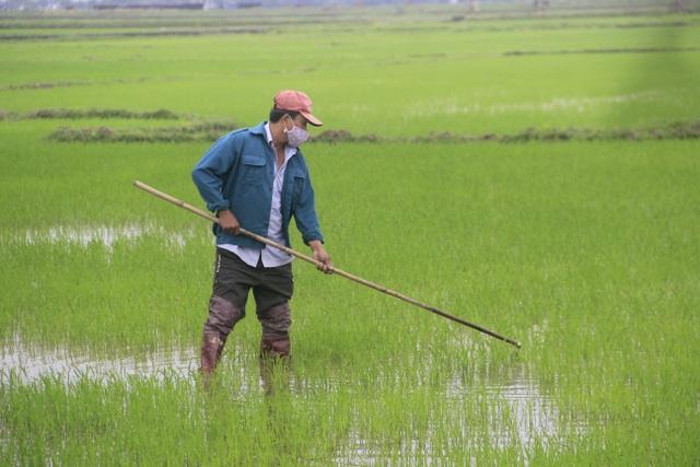 Người dân vùng lũ Quảng Trị sửa soạn đón Tết cổ truyền - 4