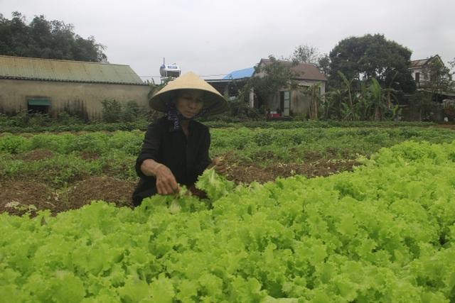 Người dân vùng lũ Quảng Trị sửa soạn đón Tết cổ truyền - 7