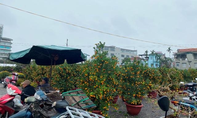 Chợ hoa xuân Hội An không ế ẩm như dự đoán; Huế người bán nhiều hơn mua - 7