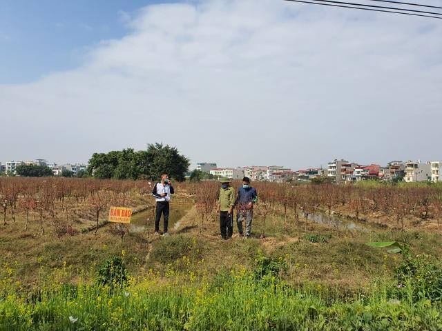 Hải Dương: Chiều 29 Tết đào nở đỏ ruộng, cả làng trắng tay vì Covid-19 - 10