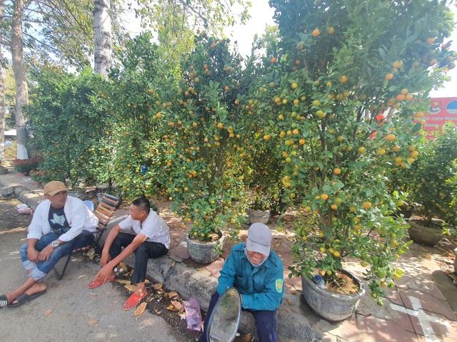 Ninh Thuận: Hoa không về thành phố, nông dân chở ra đường bán - 5