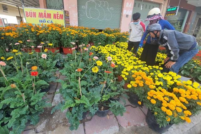 Ninh Thuận: Hoa không về thành phố, nông dân chở ra đường bán - 2