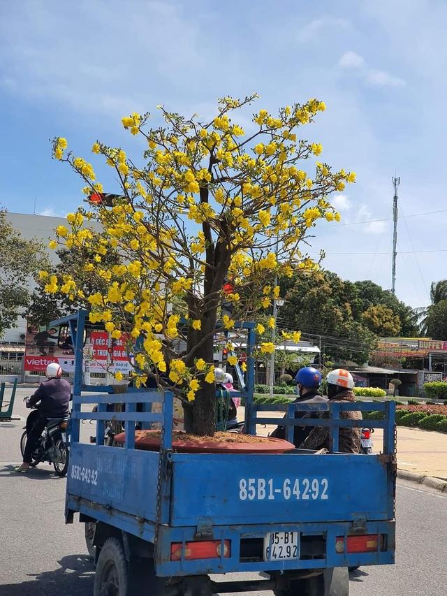 Ninh Thuận: Hoa không về thành phố, nông dân chở ra đường bán - 4