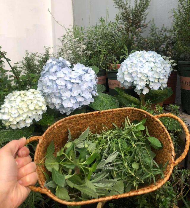 Khu vườn trăm loài thảo mộc xanh tốt trên sân thượng của mẹ đảm Hà thành - 10