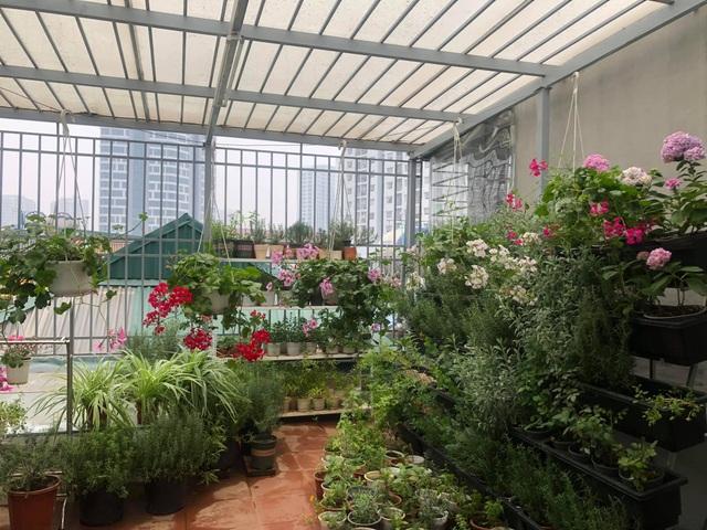 Khu vườn trăm loài thảo mộc xanh tốt trên sân thượng của mẹ đảm Hà thành - 1