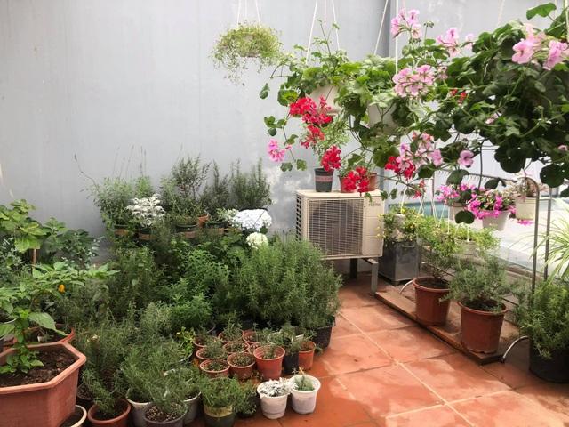 Khu vườn trăm loài thảo mộc xanh tốt trên sân thượng của mẹ đảm Hà thành - 3
