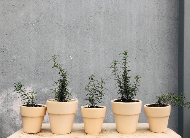 Khu vườn trăm loài thảo mộc xanh tốt trên sân thượng của mẹ đảm Hà thành - 6