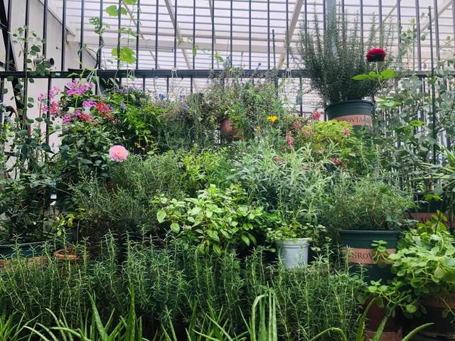 Khu vườn trăm loài thảo mộc xanh tốt trên sân thượng của mẹ đảm Hà thành - 5
