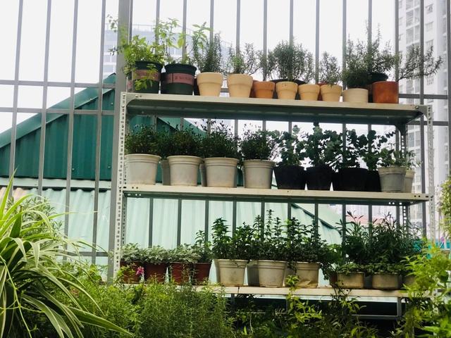 Khu vườn trăm loài thảo mộc xanh tốt trên sân thượng của mẹ đảm Hà thành - 4
