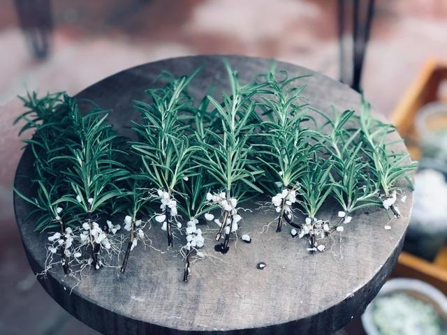 Khu vườn trăm loài thảo mộc xanh tốt trên sân thượng của mẹ đảm Hà thành - 2
