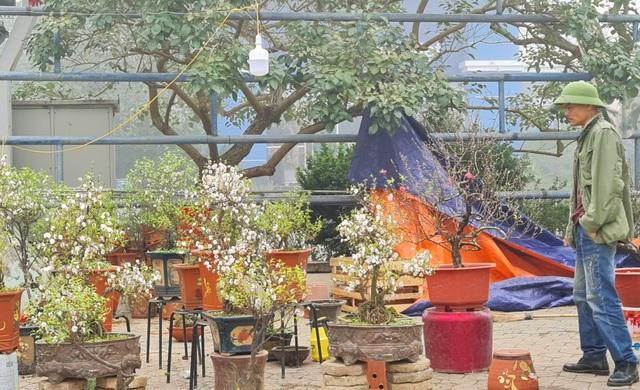 Chợ hoa Xuân ngày cuối năm: Bán tháo đồng giá - 15
