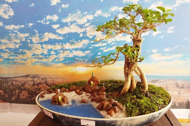 Người đàn ông Nha Trang sở hữu hàng nghìn bonsai, tiểu cảnh mini - 2