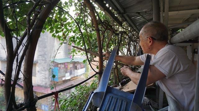 Những căn nhà phủ kín cây xanh như rừng nhiệt đới giữa phố thị tại Việt Nam - 3