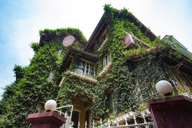 Những căn nhà phủ kín cây xanh như rừng nhiệt đới giữa phố thị tại Việt Nam - 11