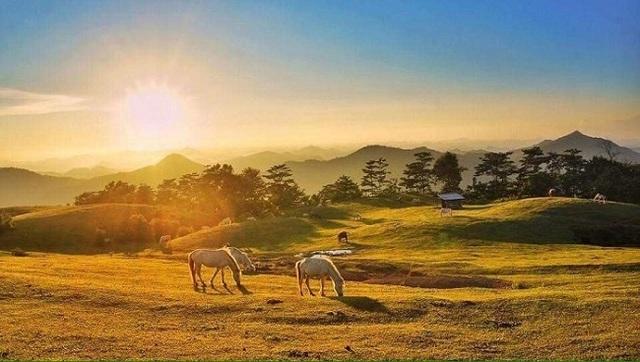 Thủ phủ nuôi ngựa lớn nhất Việt Nam với hơn 1.200 con bạch mã thuần chủng - 3