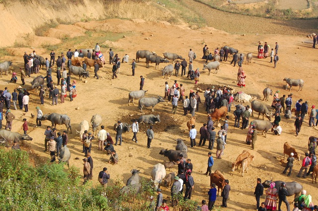 Đầu năm Tân Sửu đi chợ trâu lớn nhất vùng biên viễn Tây Bắc - 1