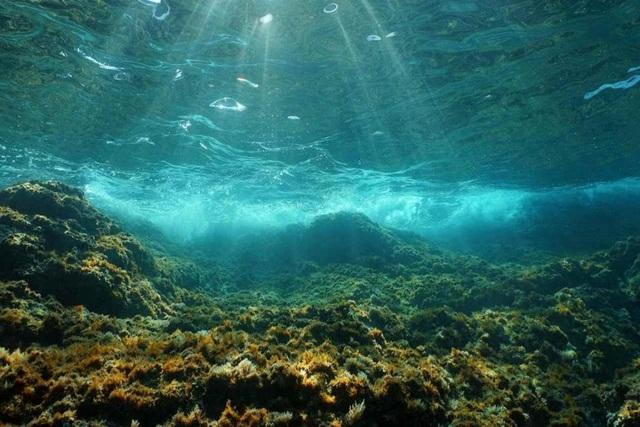 Con người đã thay đổi âm thanh đại dương - 1