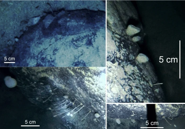 Các dạng sống bí ẩn được tìm thấy bên dưới Nam Cực - 2