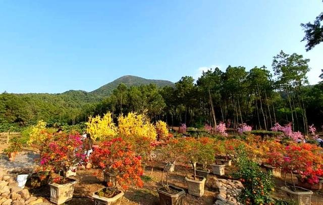 Thung lũng hoa dưới chân núi ngàn Nưa - điểm check in của giới trẻ - 3