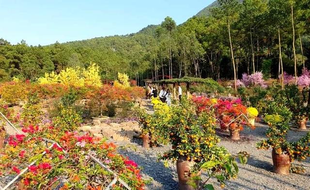 Thung lũng hoa dưới chân núi ngàn Nưa - điểm check in của giới trẻ - 4