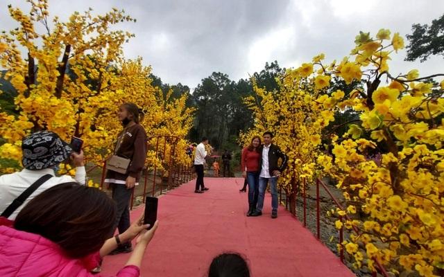 Thung lũng hoa dưới chân núi ngàn Nưa - điểm check in của giới trẻ - 8