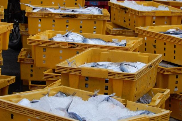 Ăn Tết trên biển, ngư dân trúng lộc đầu năm mới - 2