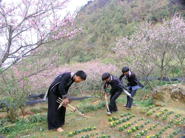Rực rỡ sắc hoa đào núi tuyệt đẹp ở Sa Pa  - 1