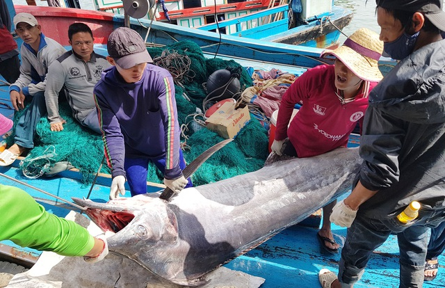 Khánh Hòa: Ngư dân trúng đậm lộc biển, thu về 100-200 triệu đồng đầu xuân - 5