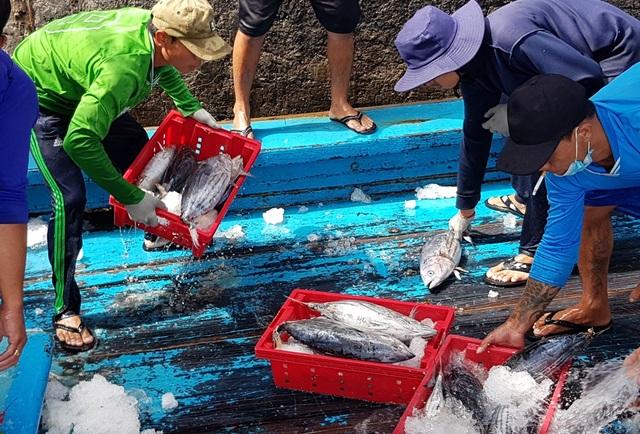 Khánh Hòa: Ngư dân trúng đậm lộc biển, thu về 100-200 triệu đồng đầu xuân - 2